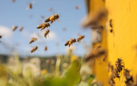 If Bees Go Down, We Do Too